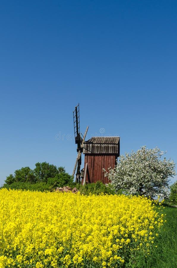 Alte hölzerne Windmühle umgeben von den Frühlings-Saison-Farben stockfotografie