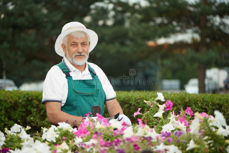 Alte hübsche Gärtnerausschnittblume mit Baumschere stockbild