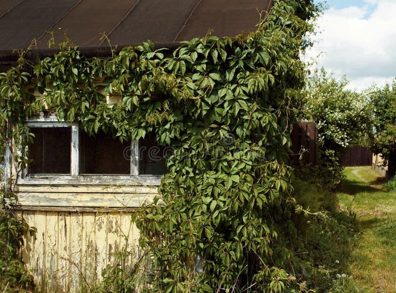 alte Hausfenstergrünbuschsommer-Dorfbahn stockbilder