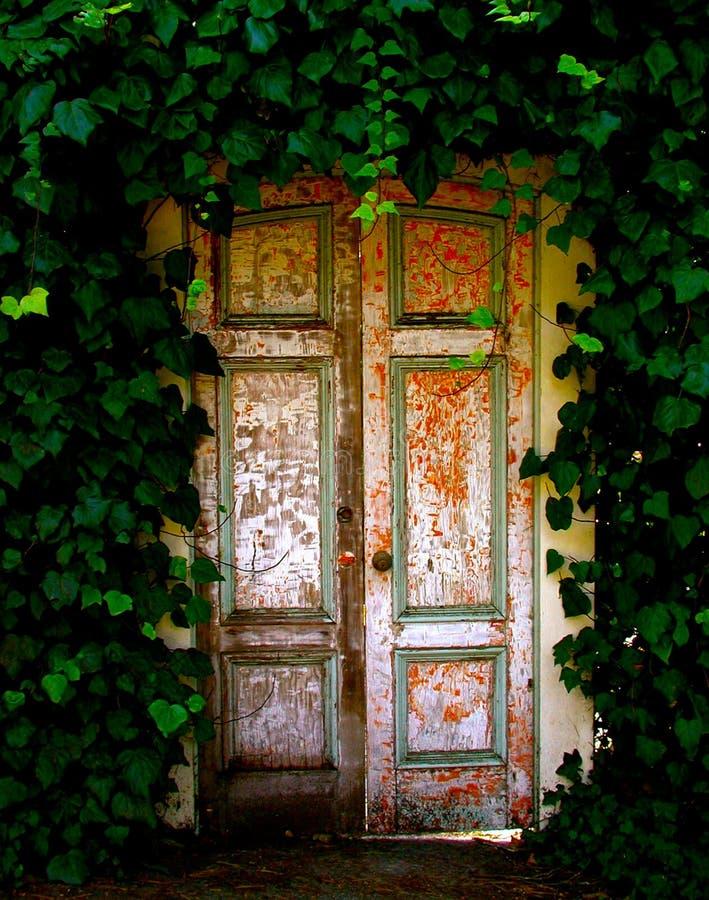 Alte Holztür versteckt im Garten des Efeus lizenzfreies stockfoto