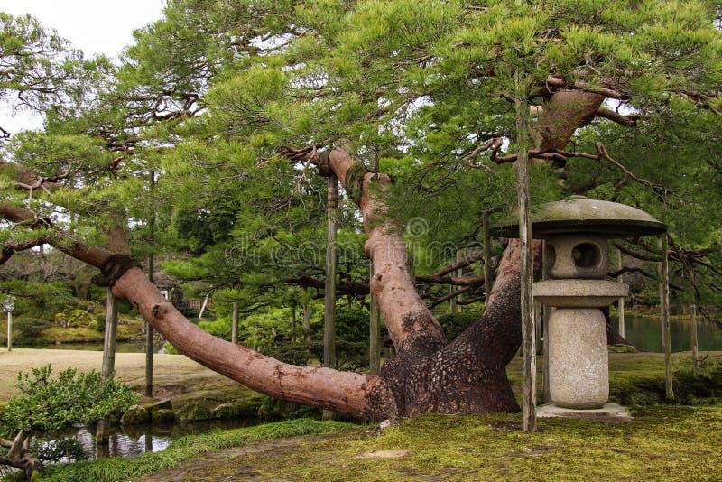 Alte Kiefer und japanische Steinlaterne im Garten Kenrokuen in Kanazawa, Japan lizenzfreies stockbild