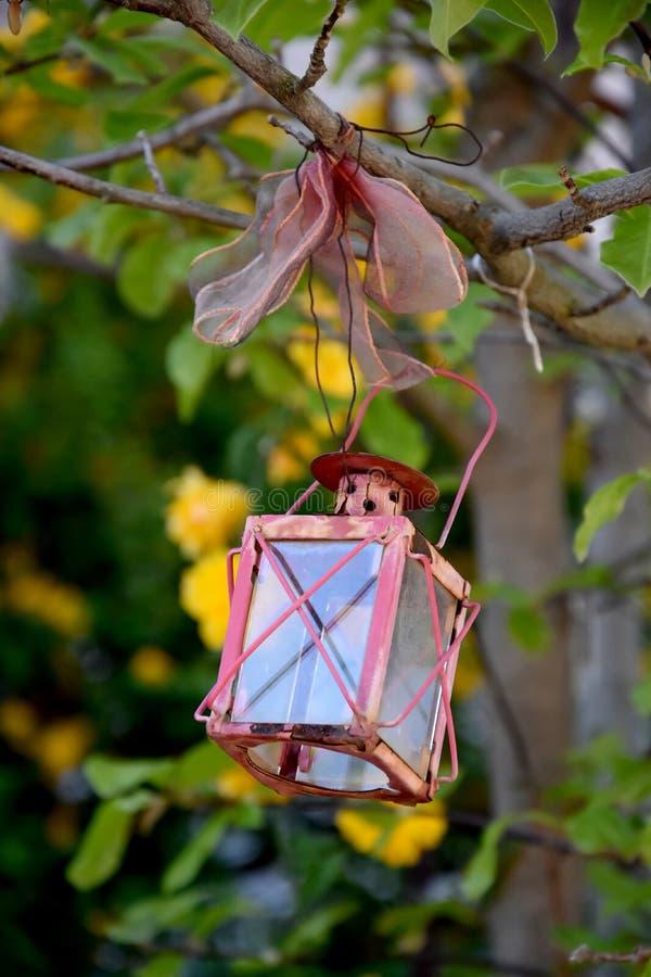Alte Laterne, die in einem Baum hängt lizenzfreie stockbilder