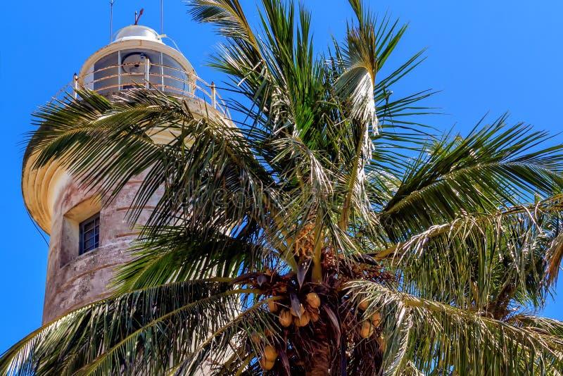 Alte Leuchtturm- und Palme mit Kokosnüssen auf der Südküste von Sri Lanka an einem sonnigen Tag gegen den blauen Himmel stockfotografie