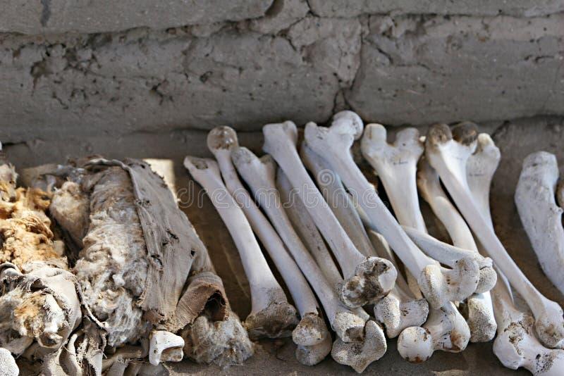 Alte Knochen