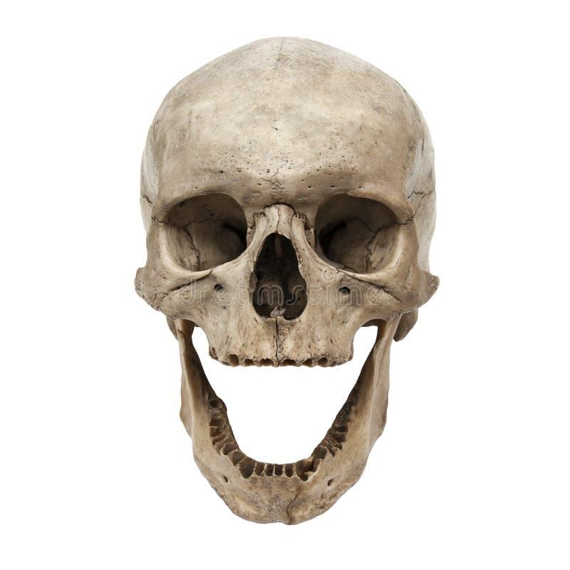 Alte menschliche Schädelfrontansicht ohne Zähne stockfotografie