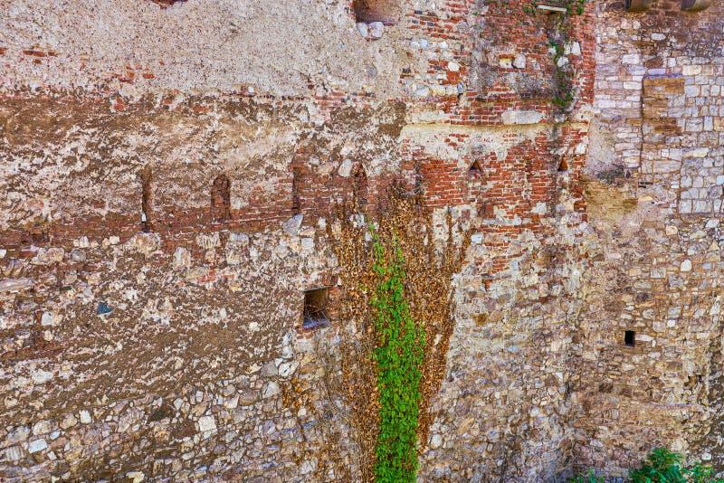 Alte mysteriöse Wand mit anhaftenden Reben stockfoto