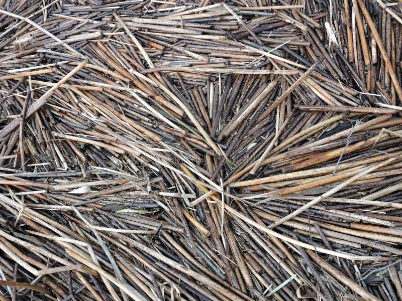 Alte Reedbetriebsstücke nähern sich See lizenzfreie stockbilder