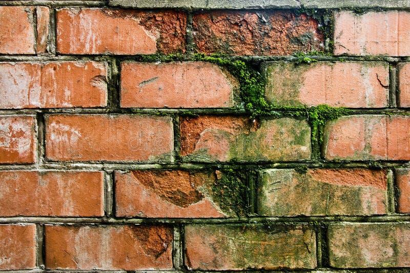 Alte rote Backsteinmauer gewachsen mit Moos stockfoto