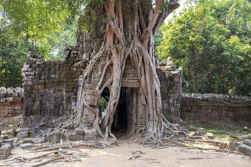 Alte Ruinen des Ta-Somtempels in Angkor Wat Komplex, Kambodscha Steintempelruine mit Dschungelbaum-Luftwurzeln stockfotografie