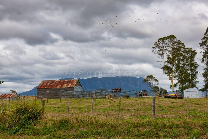 Alte Scheune vor Berg Roland, Tasmanien stockbilder