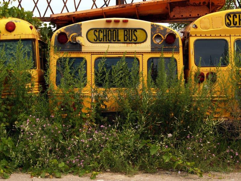 Alte Schulbusse mit Unkräutern lizenzfreie stockfotografie