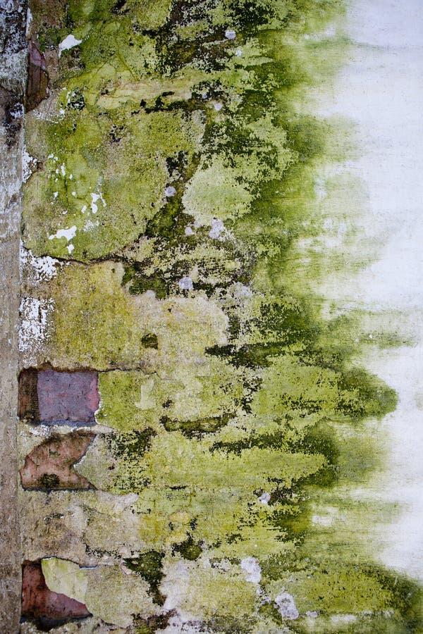 Alte Steinbacksteinmauer bedeckt mit grüner Form lizenzfreies stockfoto