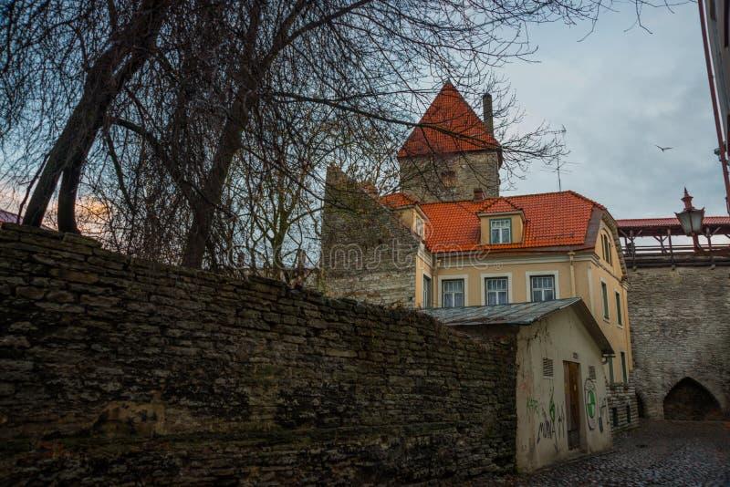 Alte Steinfestungswand und -turm Estnische Hauptstadt, Tallinn lizenzfreie stockbilder