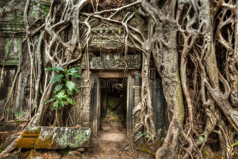 Alte Steintür- und Baumwurzeln, Tempel Ta Prohm, Angkor, Camb stockbild