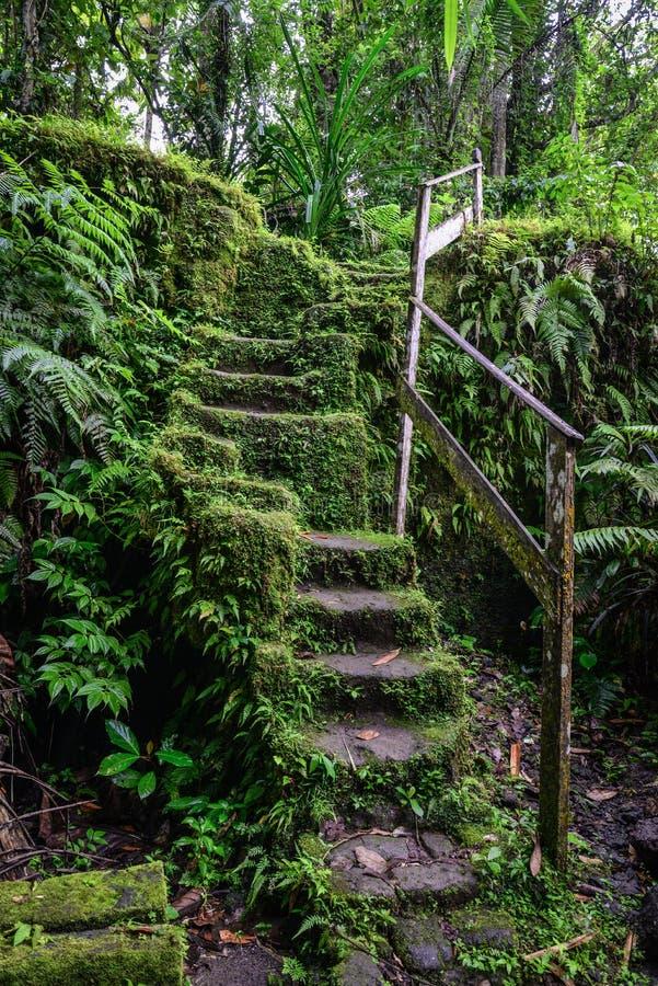 Alte Steintreppe in überwuchertem Waldgarten stockbild