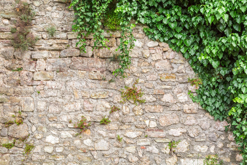 Alte Steinwand mit Efeu lizenzfreies stockfoto