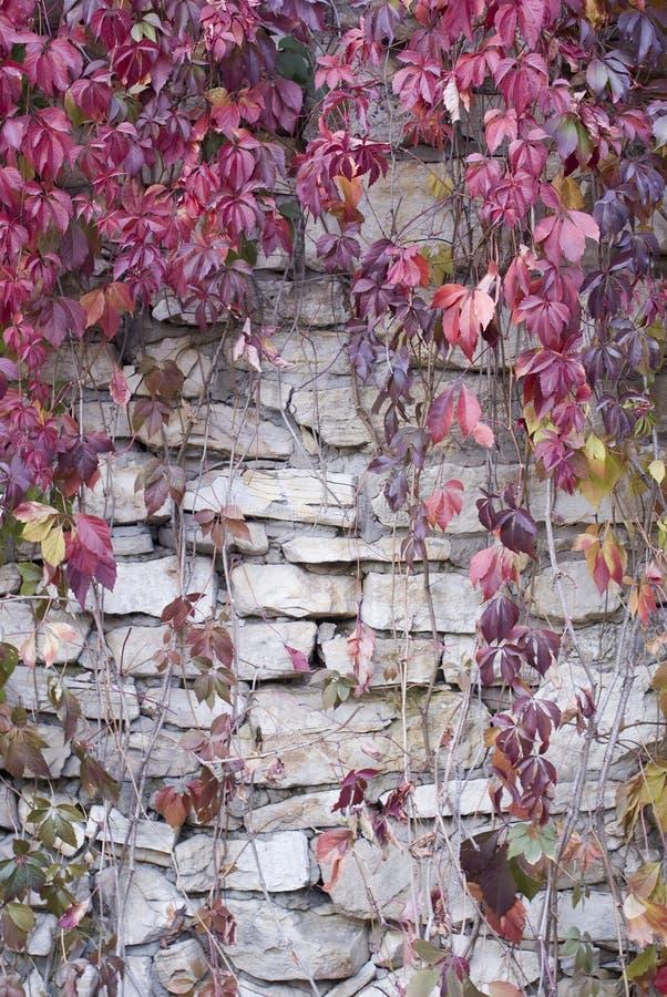 Alte Steinwand mit Reben lizenzfreie stockfotografie