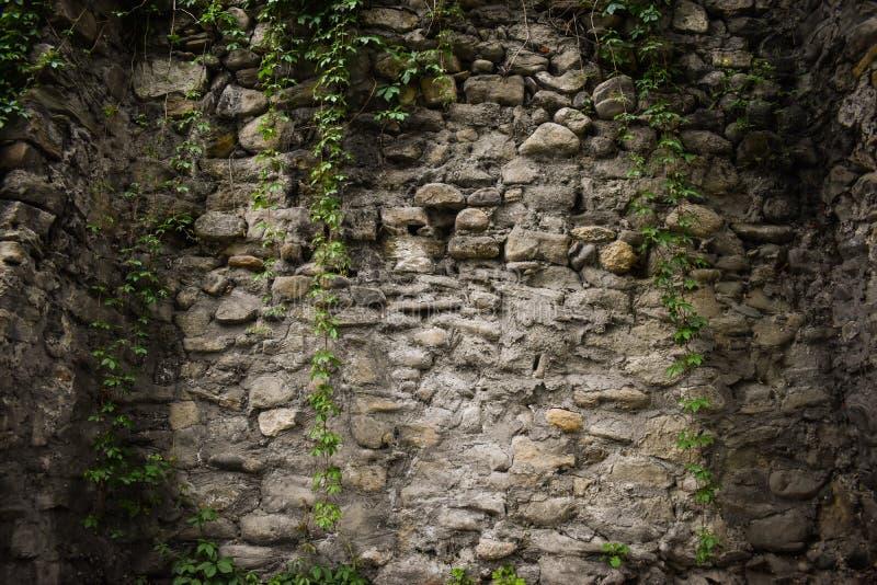 Alte Steinwandfestung mit grünem Efeu Wirkliche Beschaffenheit von alten Steinziegelsteinen Qualitätsfotohintergrund der Maurerar stockbild