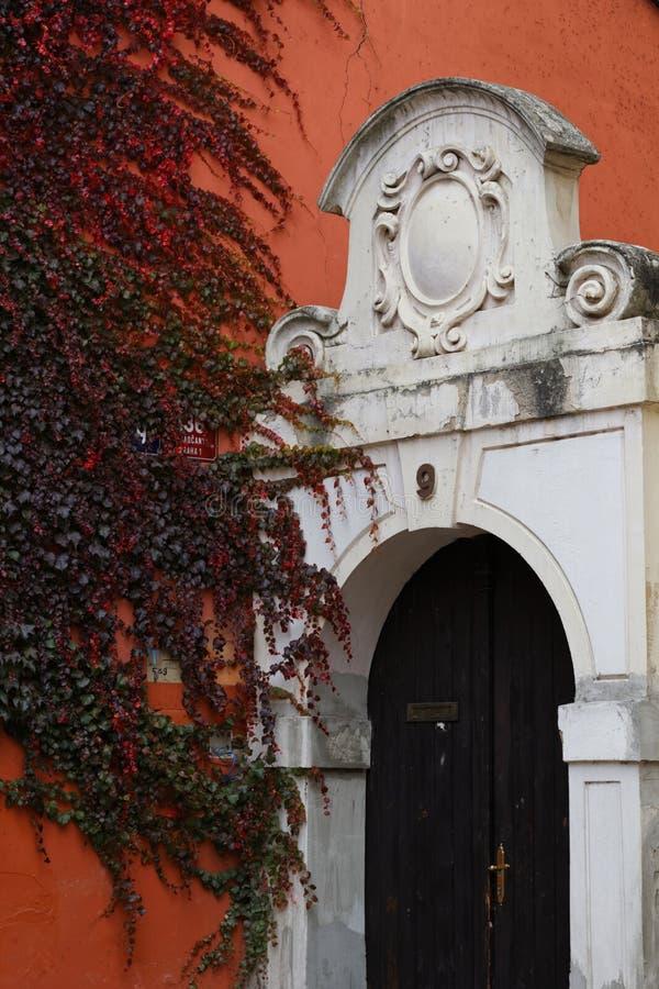 Alte Türen auf dem Hintergrund einer Wand kräuselten sich mit Efeu stockfotos