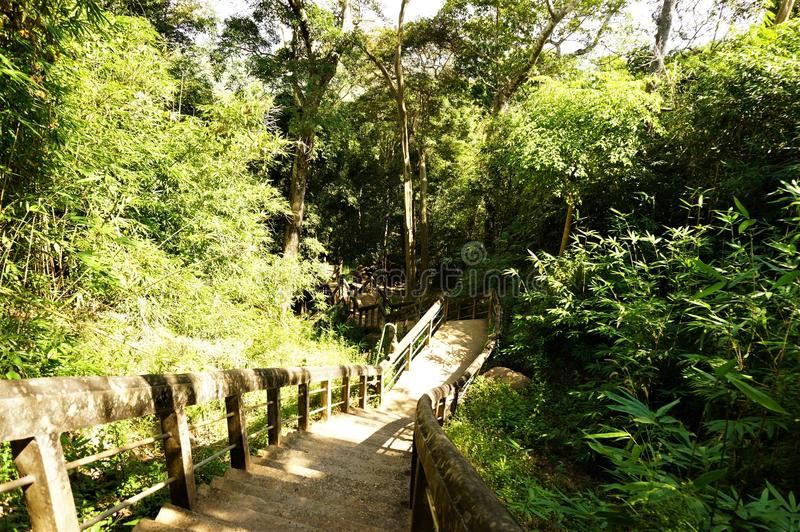 Alte Treppe auf unter den Wäldern lizenzfreie stockbilder