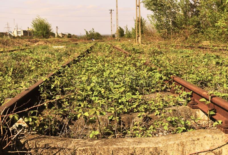 Alte verlassene rostige Schienen mit Unkräutern und Anlagen durch sie lizenzfreie stockfotografie