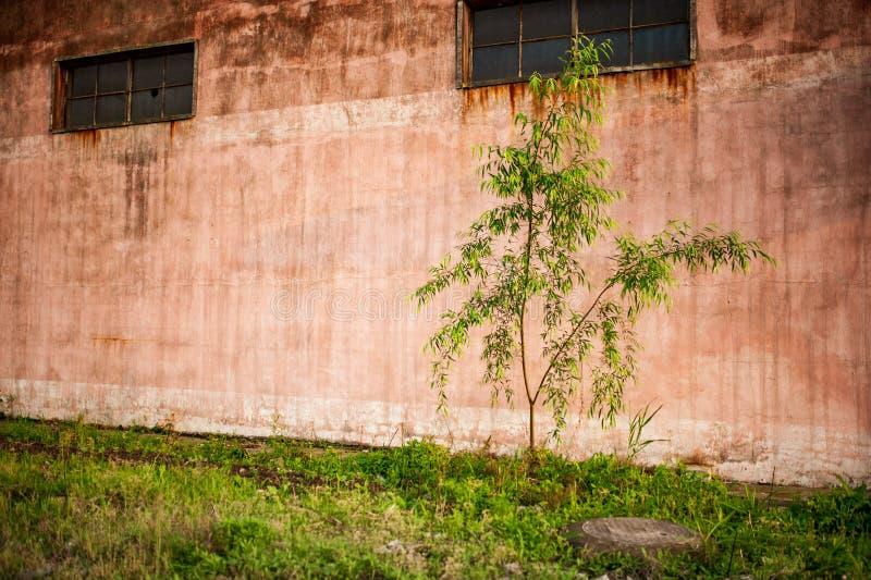 Alte verrostete Wand des verlassenen Lagers lizenzfreies stockbild