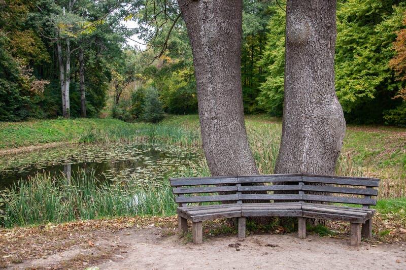 Alte verwitterte hölzerne Bänke mit ruhigem Teichwasserhintergrund stockfotografie