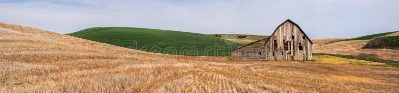 Alte verwitterte Scheune umgeben durch Weizenfelder lizenzfreies stockfoto