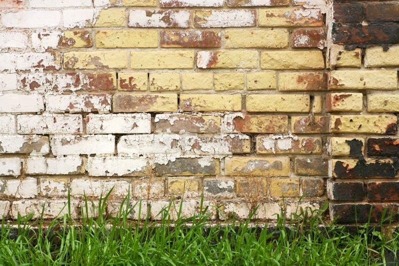 Alte Wand und frisches Gras stockfoto