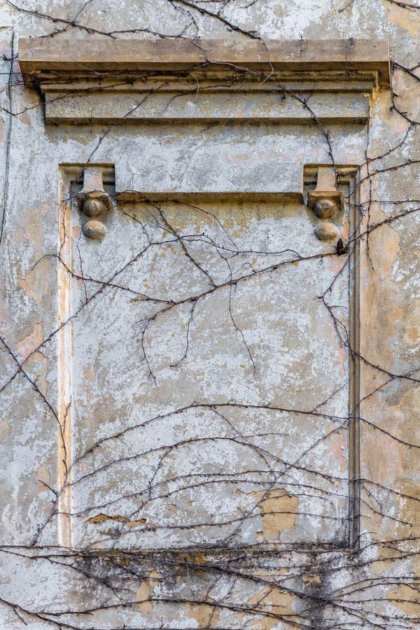 Alte Wandputzkriechpflanzen des Hintergrundbeschaffenheitsrahmens stockbild