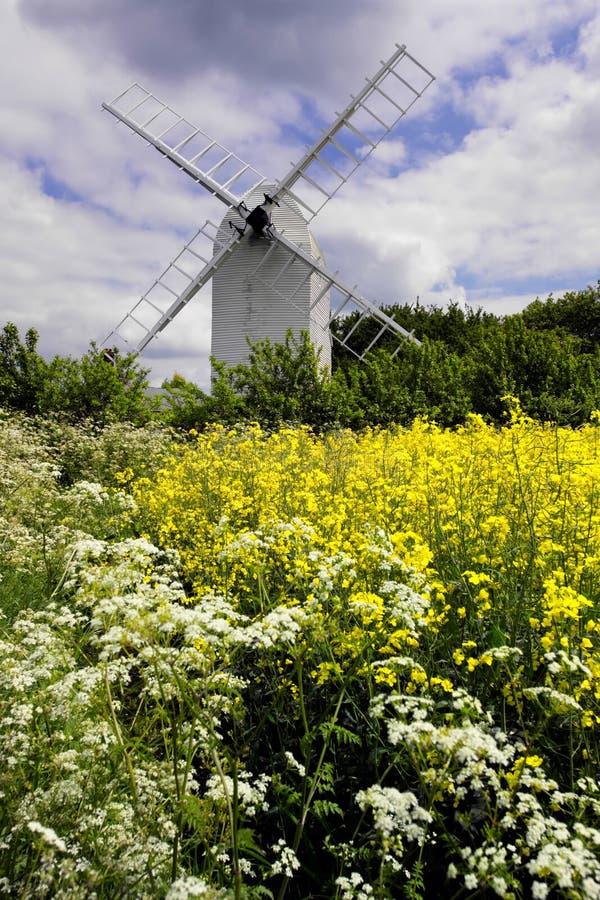 Alte Windmühle mit dem ölhaltigen Samen und den wilden Blumen stockbilder