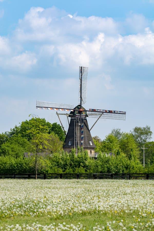 Alte Windmühle und Weide mit wilden blühenden Blumen, niederländische Landschaftslandschaft stockbilder