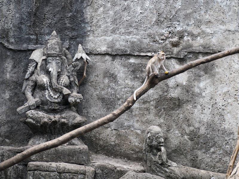 Alter Affe beherrscht das Hängen an seinem Baumstamm unter dem Anstarren von Gaesh, der Elefantgott stockbilder