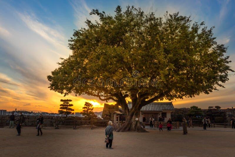 Alter anstarrender Mann ein großer Baum lizenzfreie stockfotos