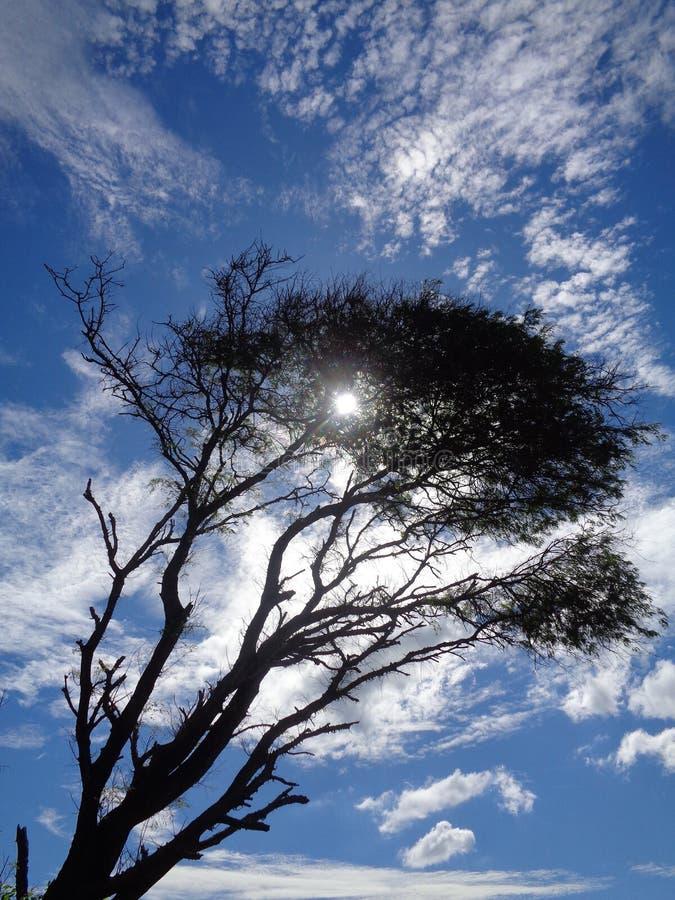 Alter Baum lizenzfreie stockfotos