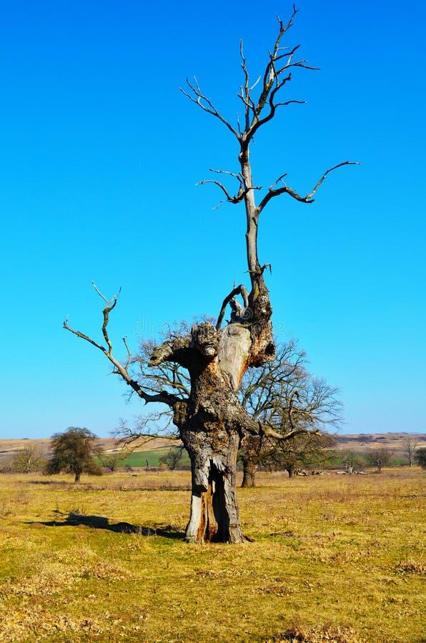 Alter Baum stockfoto