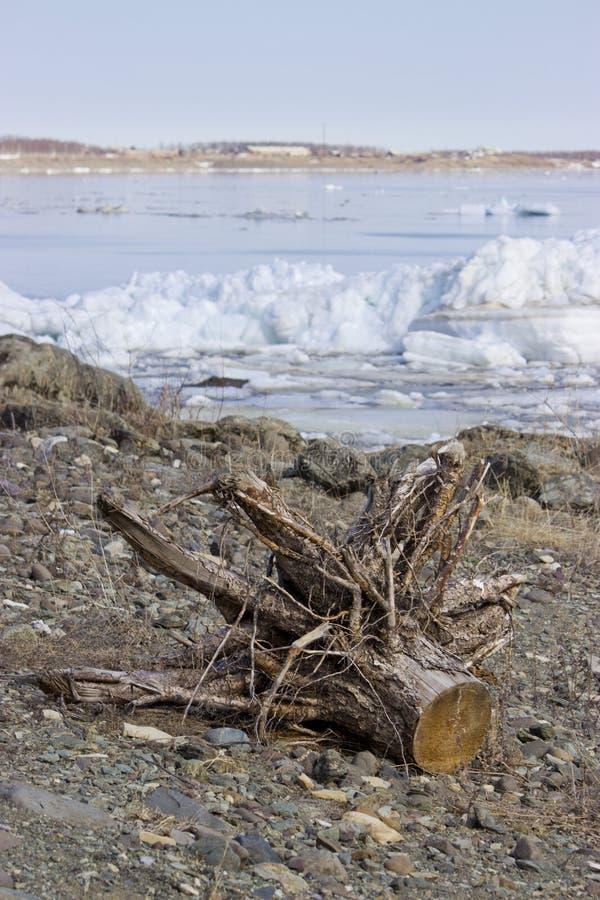Alter Baum auf dem Ufer lizenzfreies stockfoto