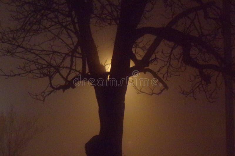 Alter Baum auf einer nebeligen Nacht mit Licht hinten stockfotografie