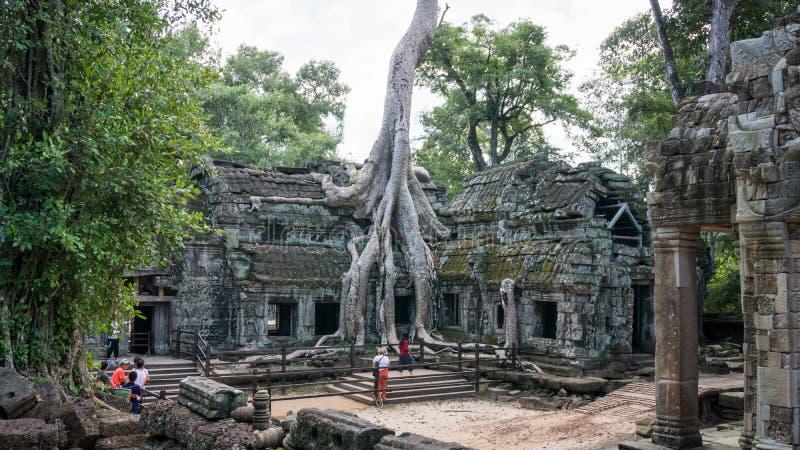 Alter Baum, der ein Gebäude von Tempel Ta Prohm an archäologischem Park Angkor von Sie umarmt lizenzfreies stockbild
