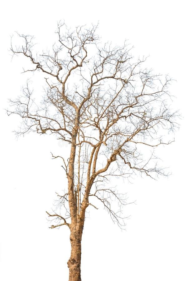 Wunderbar Herbst Baum Färbung Seite Zeitgenössisch - Druckbare ...