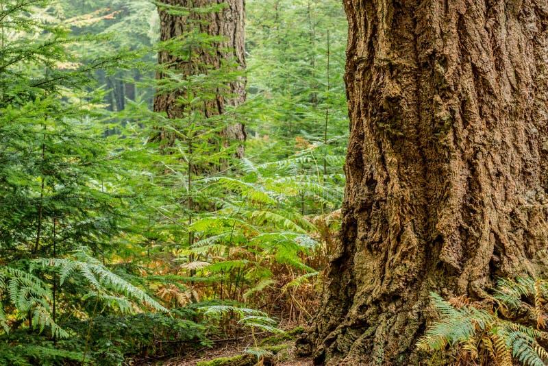 alter Baum im Wald lizenzfreie stockbilder