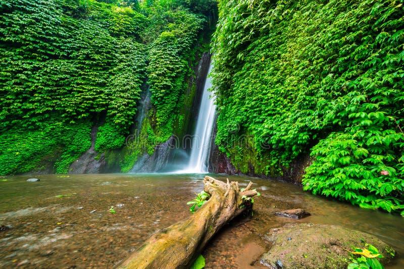 Alter Baum im Wasser nahe Munduk-Wasserfall stockfoto