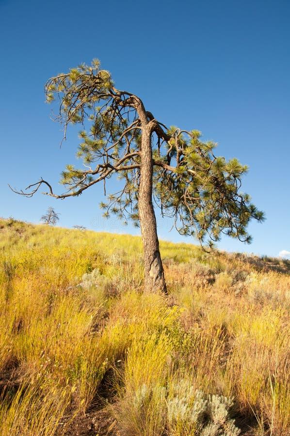 Alter Baum und getrocknetes Gras lizenzfreie stockfotografie