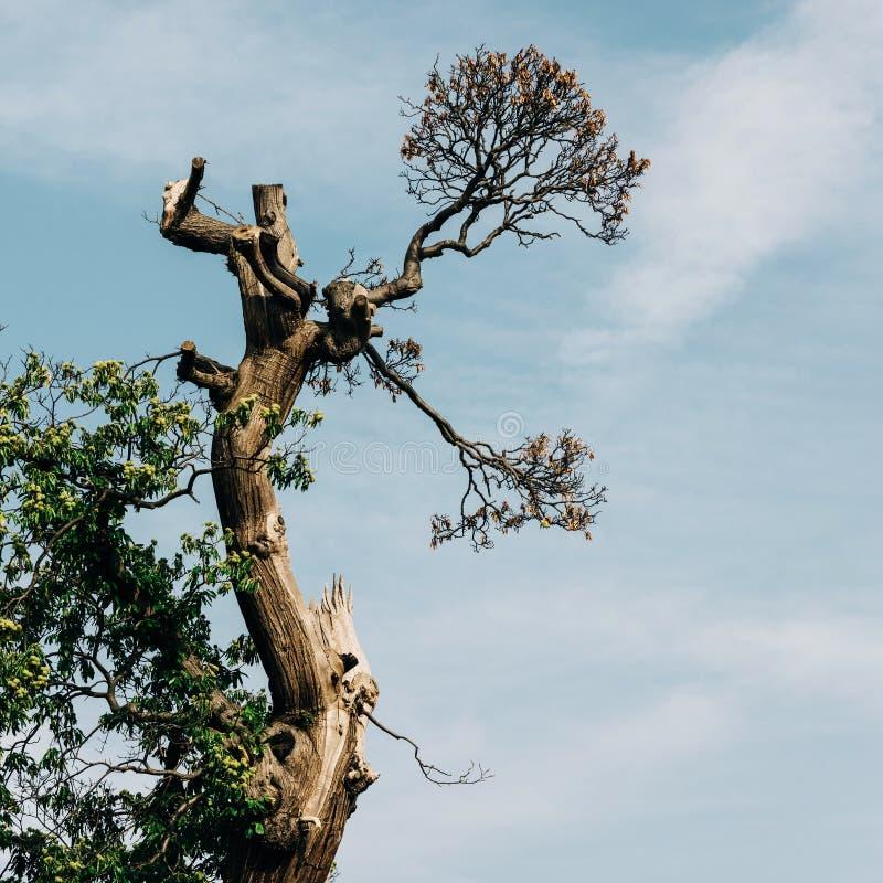 Alter Baum- und Himmelhintergrund stockfotografie
