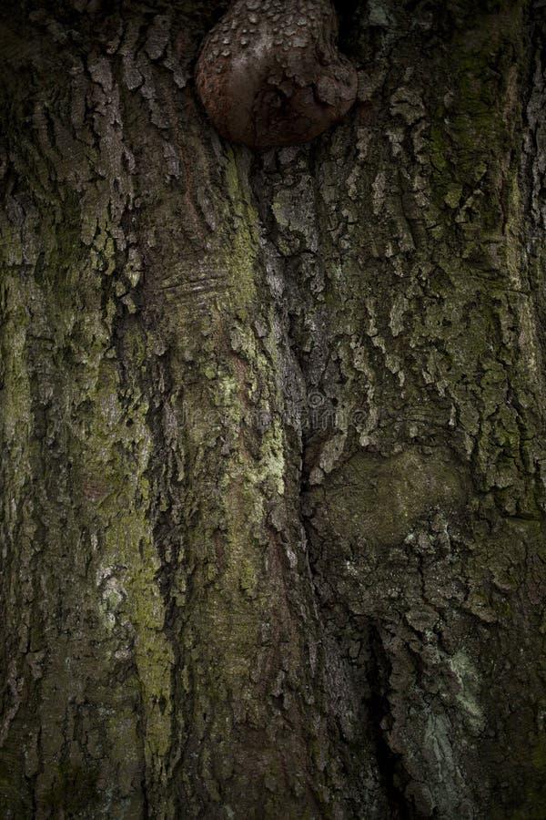 Alter Baumrindeabschluß oben stockbild