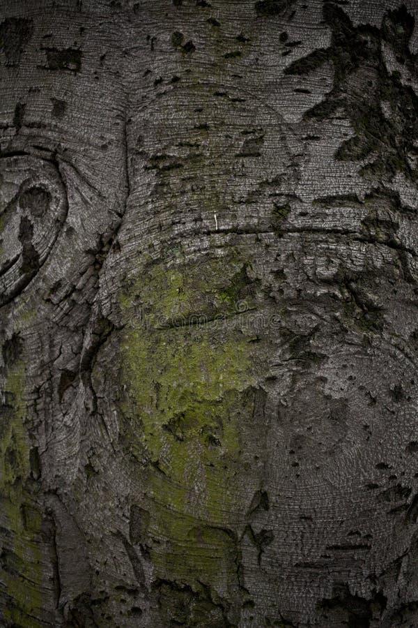Alter Baumrindeabschluß oben lizenzfreie stockfotografie