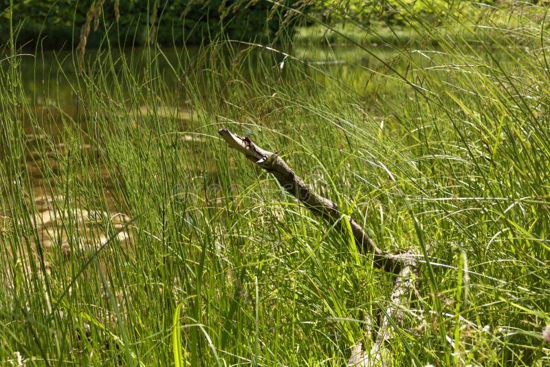 Alter Baumstumpf im Gras stockfotos