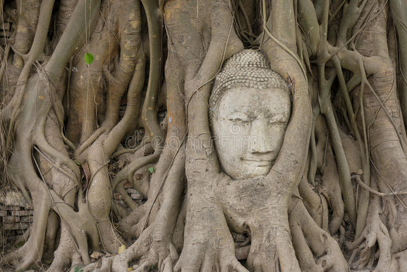 Alter Buddhismuskopf lizenzfreie stockfotos