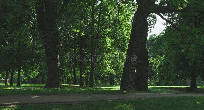 Alter Eichenwaldhintergrund stockbild