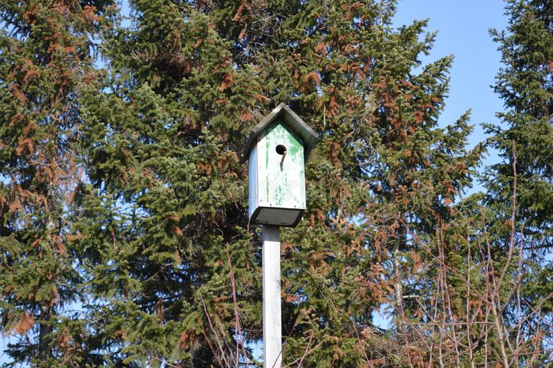 alter hölzerner Frühlingsstar des Vogelhausvogelhauses stockfotos